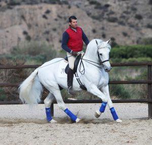 Qualified PRE Stallion