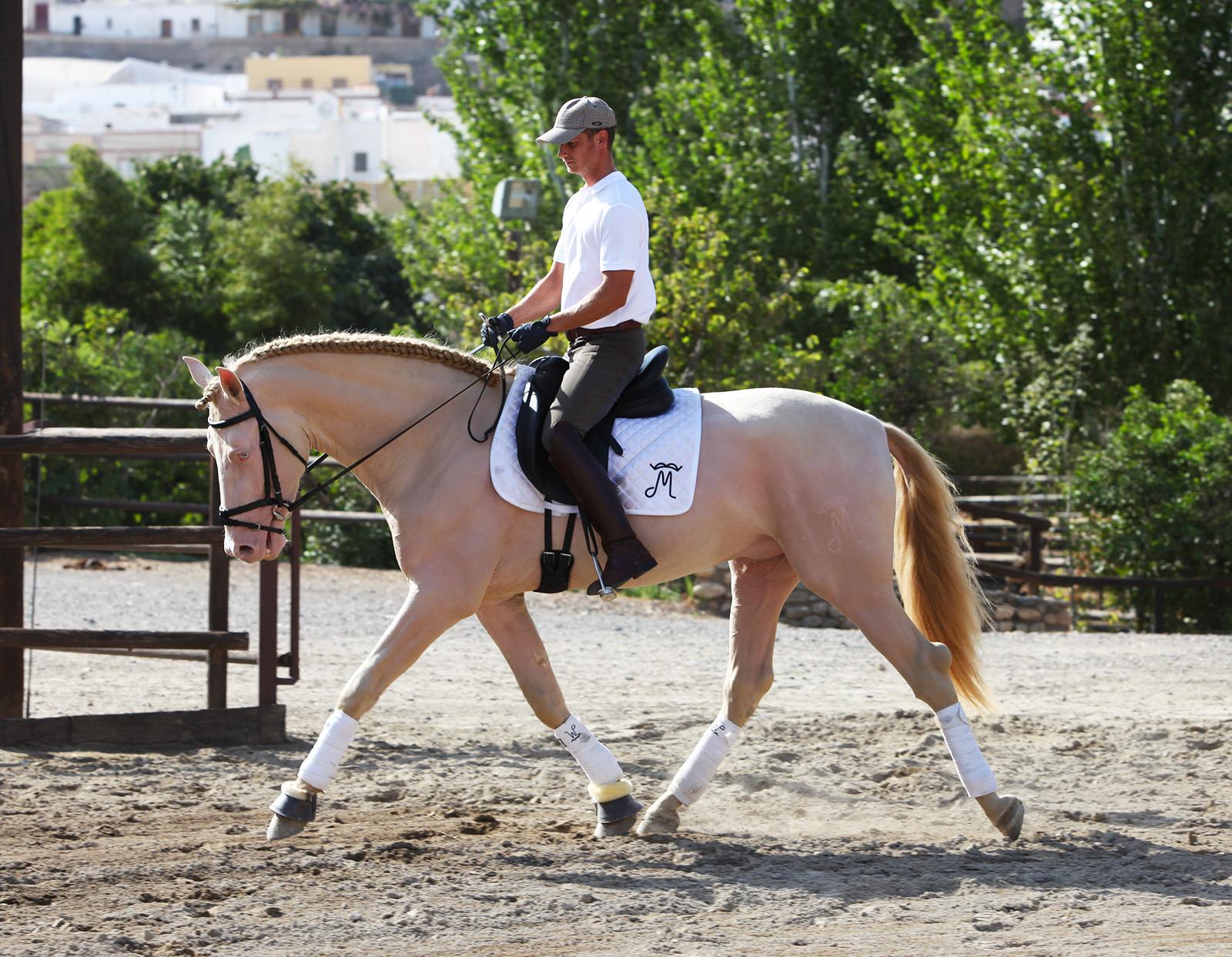 Caballo PRE Capa Perla - Perlino Andalusian Horse