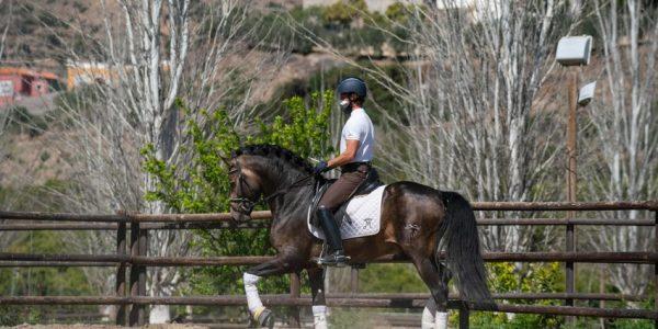 caballo montado