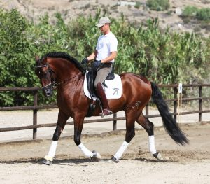 Andalusian Dressage Horses