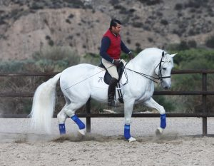 Stallion Horses